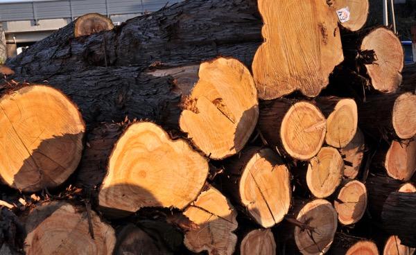 原木の写真