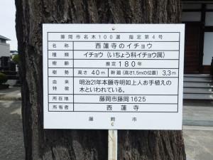 西蓮寺の藤岡市名木100選案内板