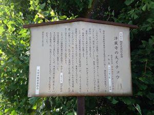 浄蔵寺の大イチョウの説明
